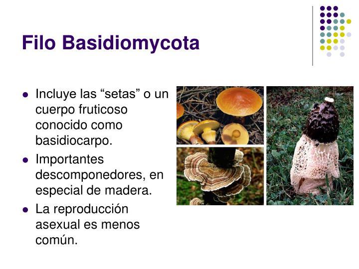 Basidiomycetes reproduccion asexual por