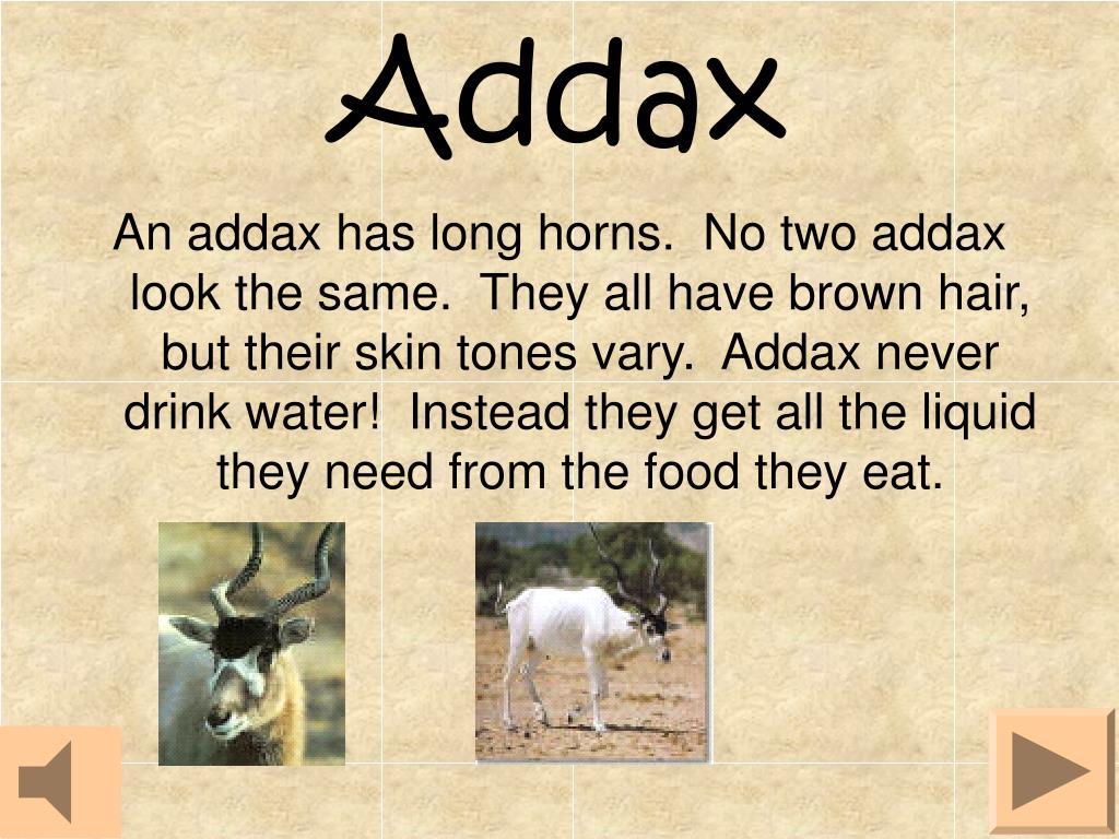 Addax