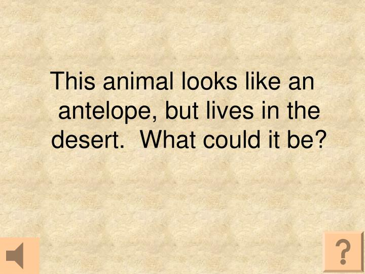 This animal looks like an antelope, but lives in the desert.  What could it be?