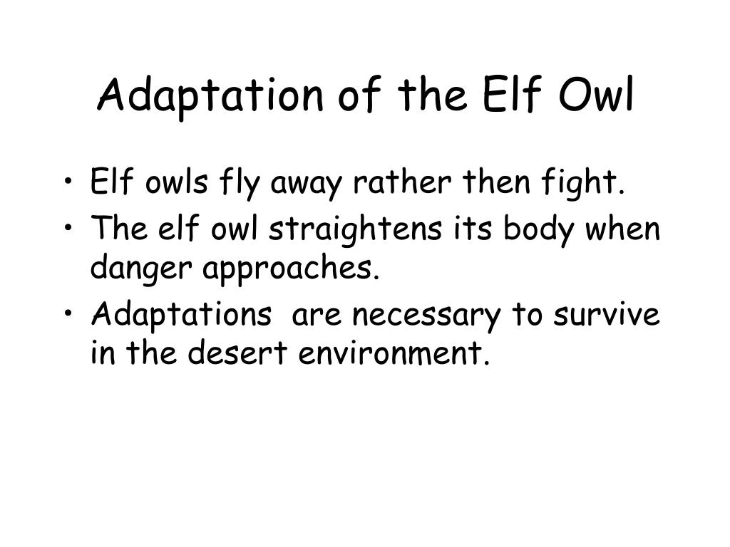 Adaptation of the Elf Owl