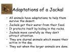 adaptations of a jackal