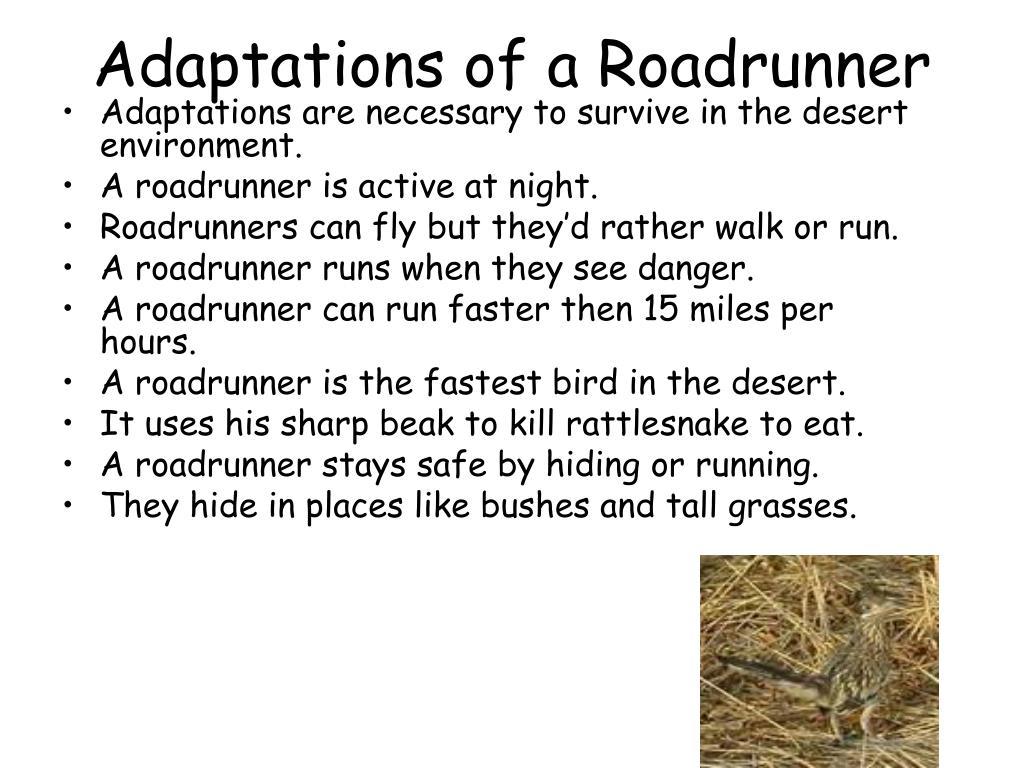 Adaptations of a Roadrunner