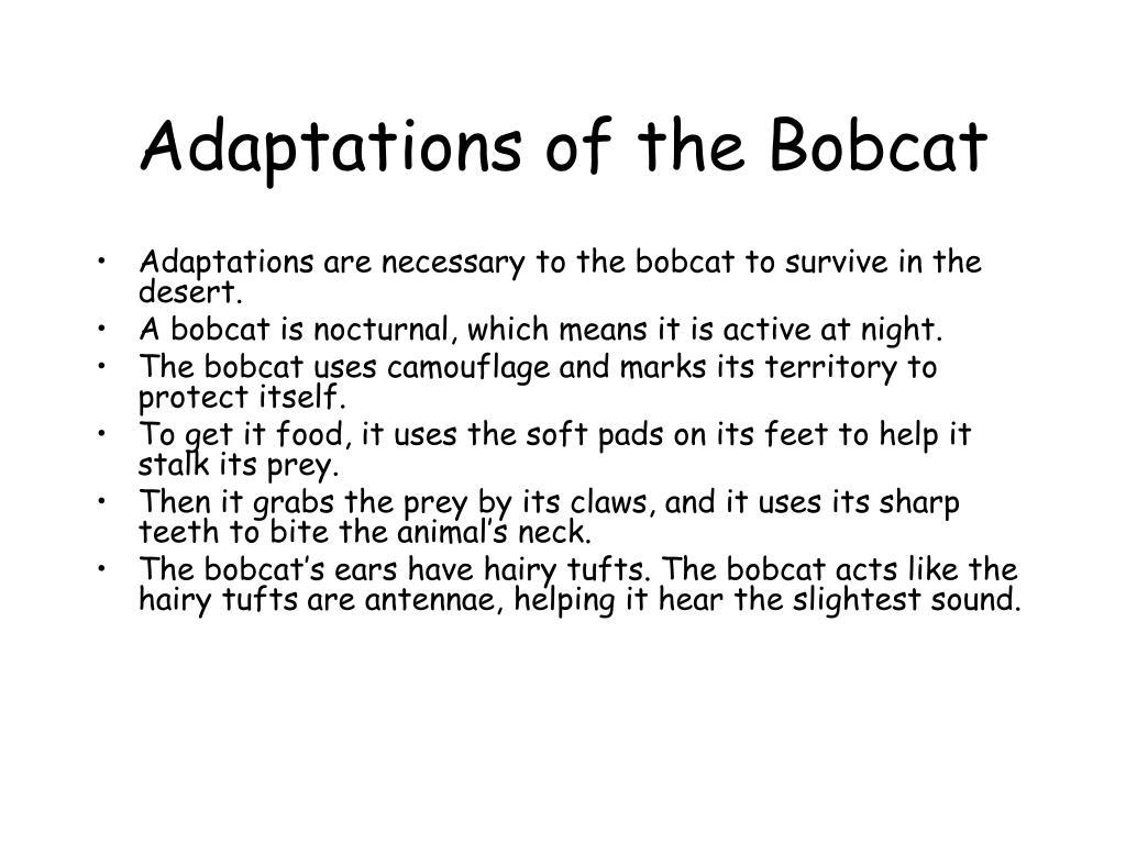 Adaptations of the Bobcat