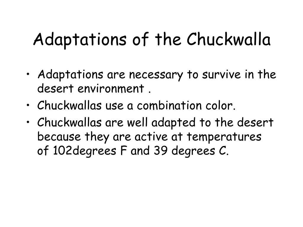 Adaptations of the Chuckwalla