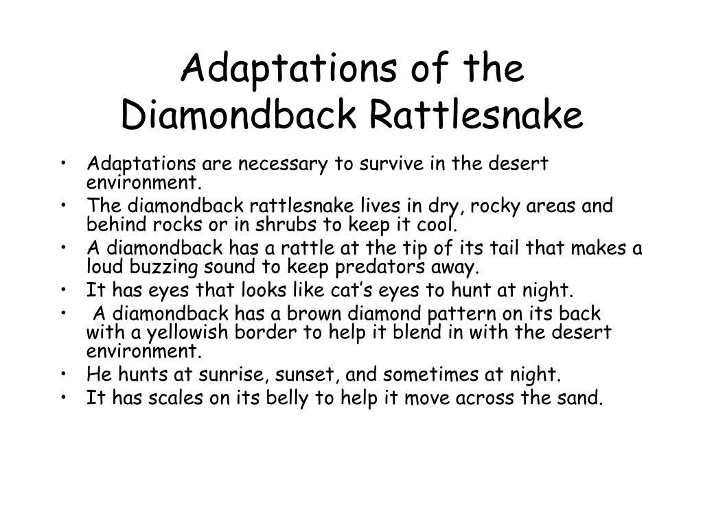 Adaptations of the Diamondback Rattlesnake