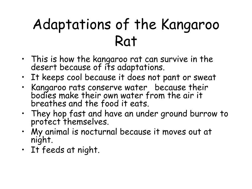 Adaptations of the Kangaroo Rat