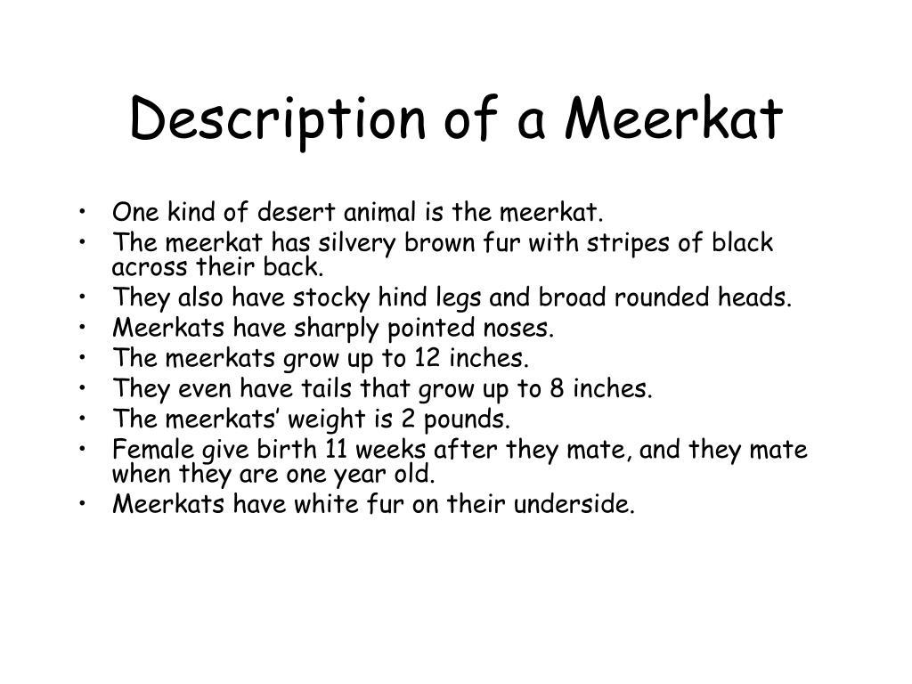 Description of a Meerkat