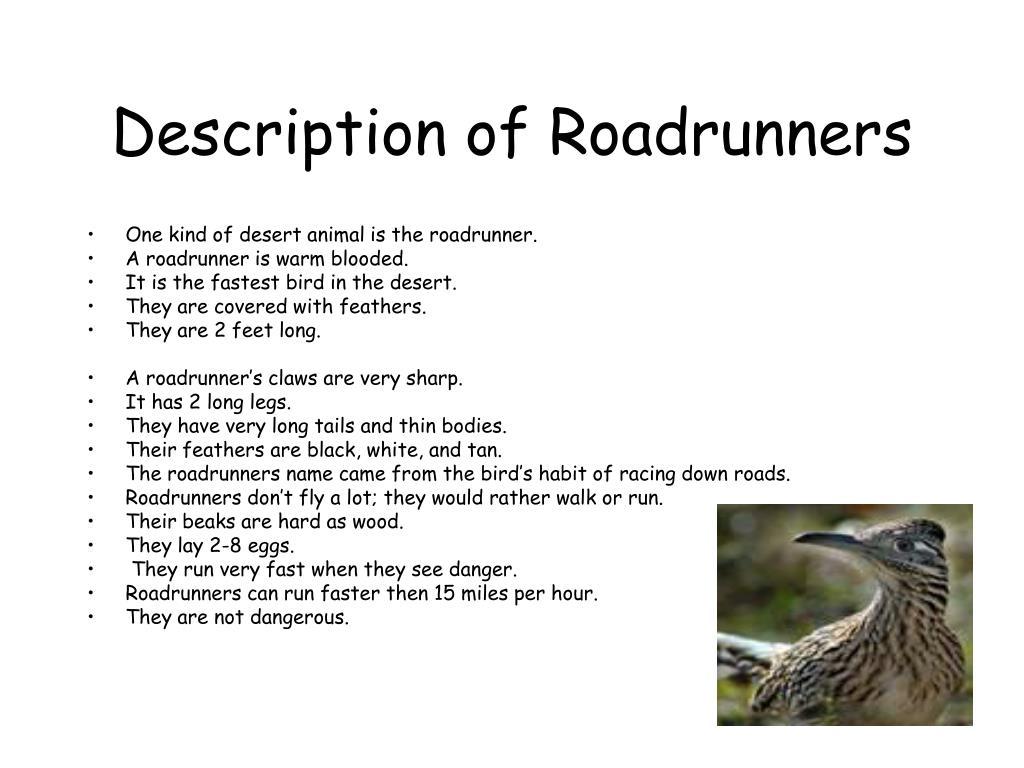 Description of Roadrunners