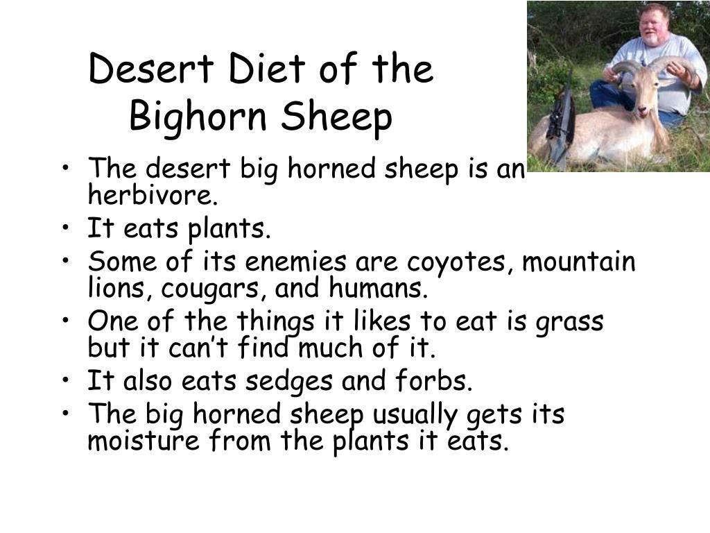 Desert Diet of the Bighorn Sheep