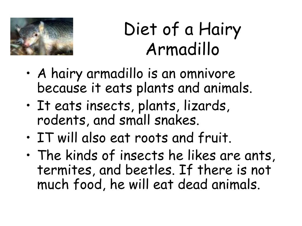 Diet of a Hairy Armadillo