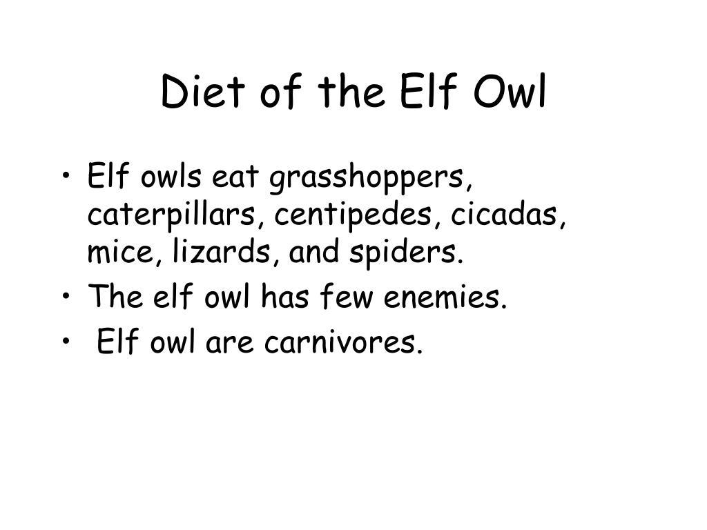 Diet of the Elf Owl