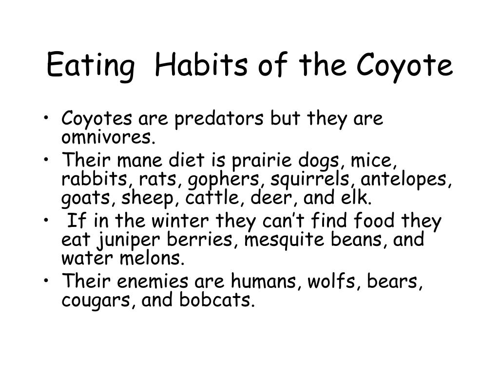 Eating  Habits of the Coyote
