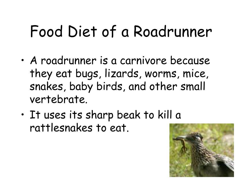 Food Diet of a Roadrunner