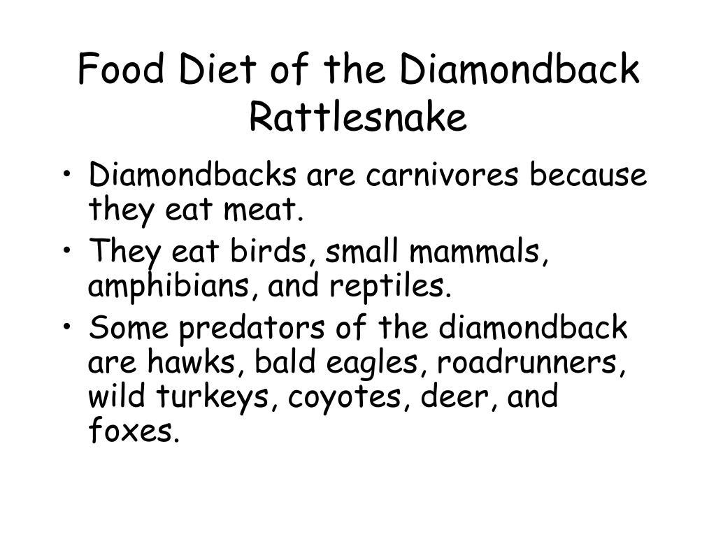 Food Diet of the Diamondback Rattlesnake