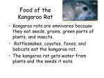 food of the kangaroo rat