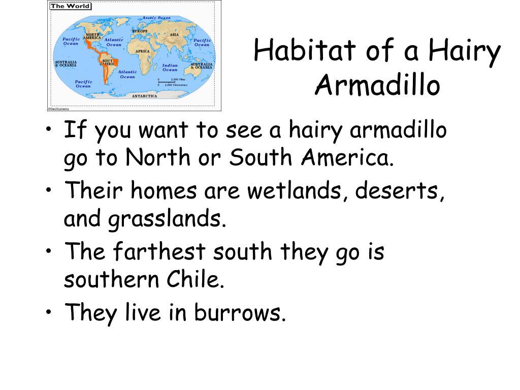 Habitat of a Hairy Armadillo