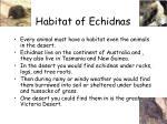 habitat of echidnas