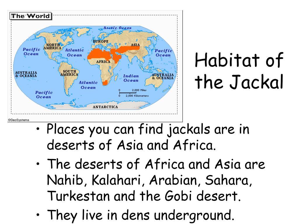 Habitat of the Jackal