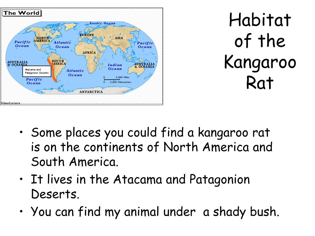 Habitat of the Kangaroo Rat