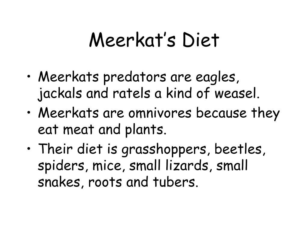 Meerkat's Diet