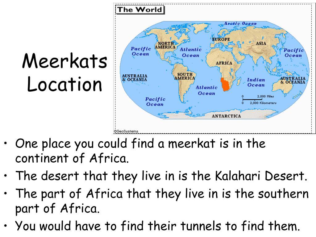 Meerkats Location