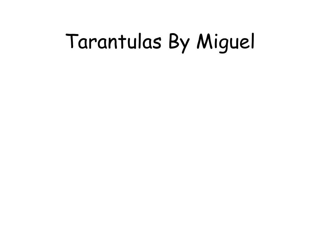 Tarantulas By Miguel