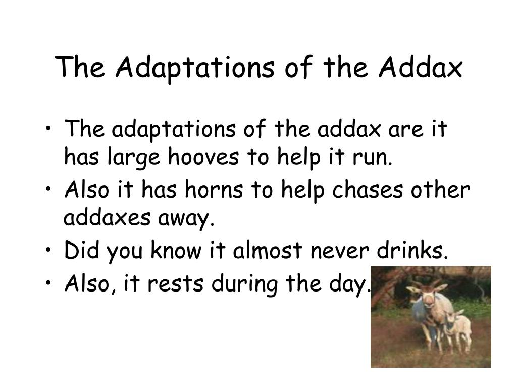 The Adaptations of the Addax