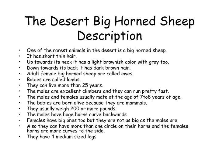 The desert big horned sheep description