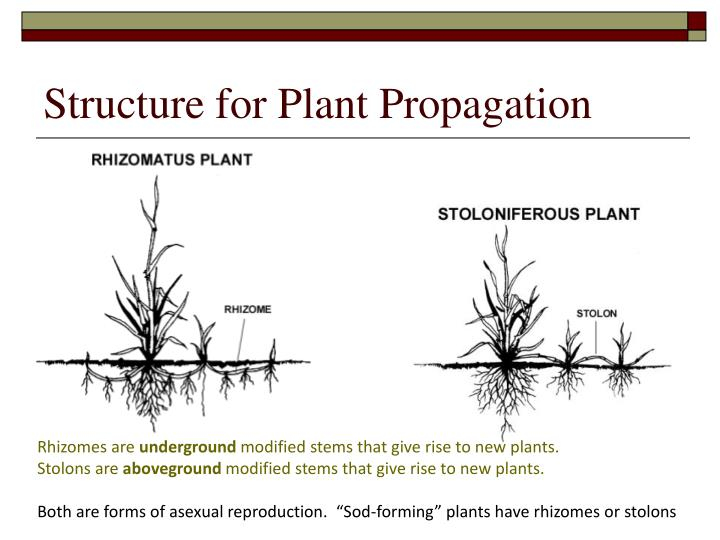 Structure for Plant Propagation