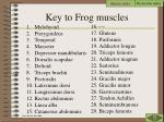 key to frog muscles