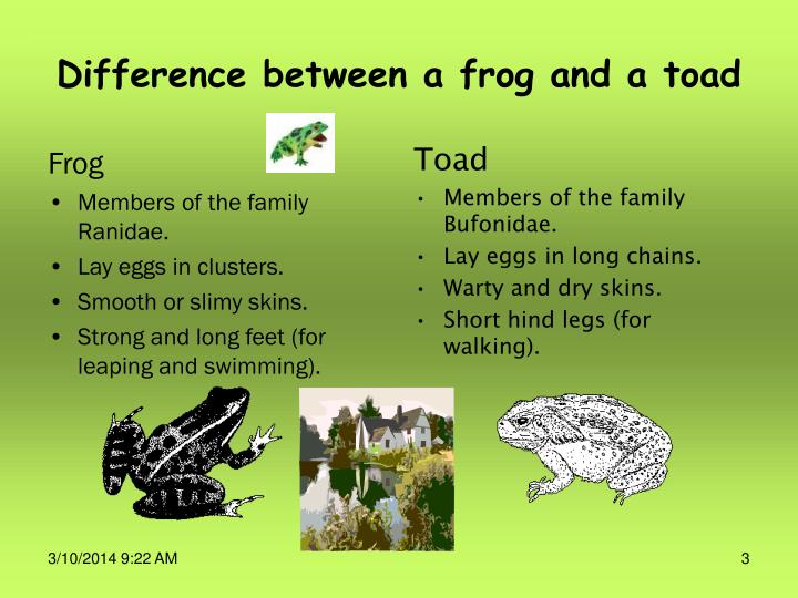 Difference between a frog and a toad