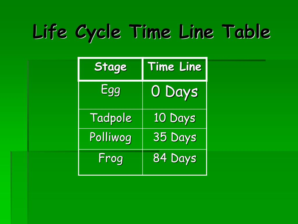 Life Cycle Time Line Table