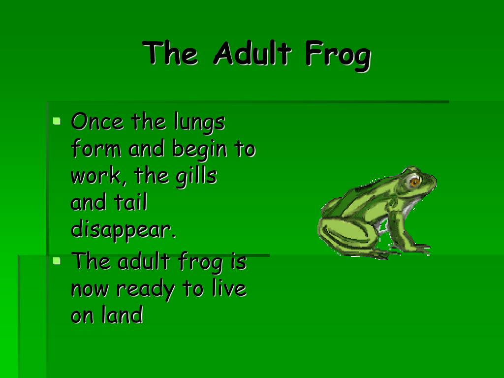 The Adult Frog
