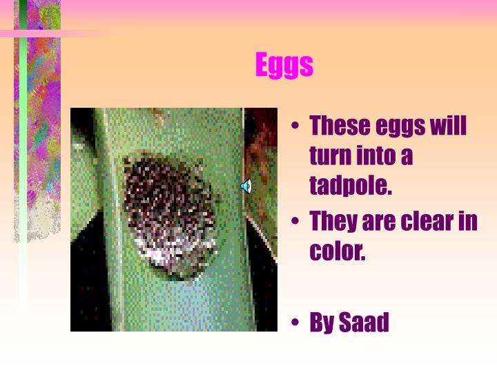 These eggs will turn into a tadpole.