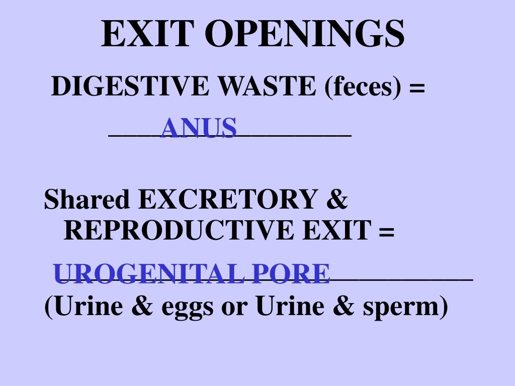 EXIT OPENINGS