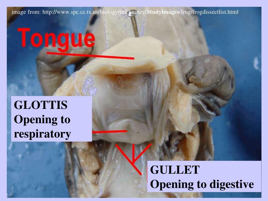 image from: http://www.spc.cc.tx.us/biology/jmckinney/