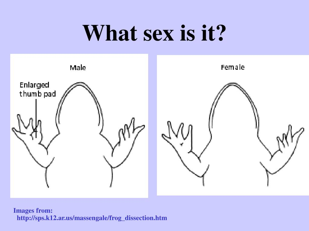 What sex is it?