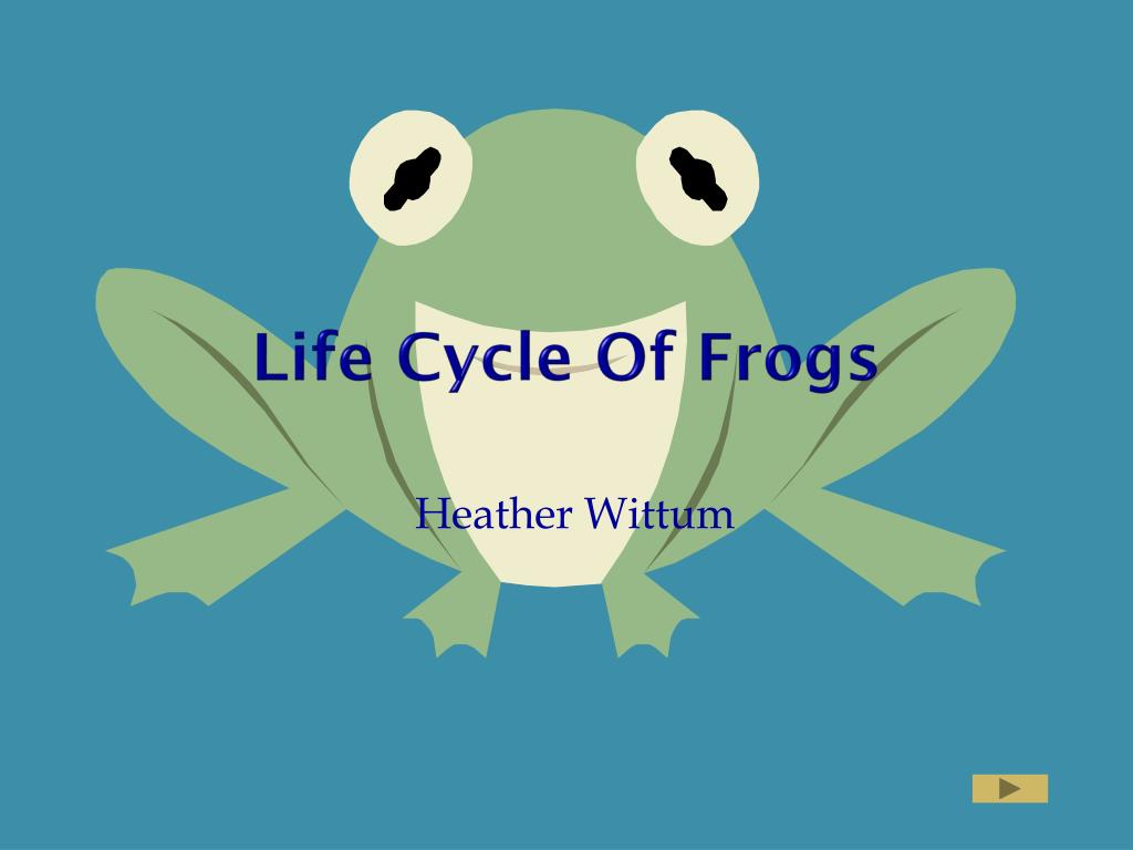 life cycle of frogs l.
