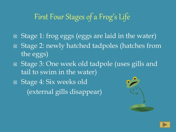 First Four Stages of a Frog's Life