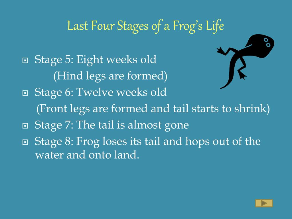 Last Four Stages of a Frog's Life