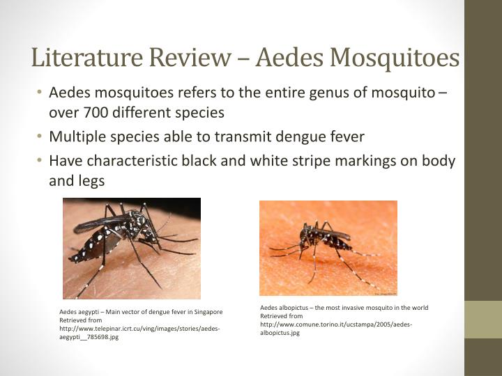 Literature Review – Aedes Mosquitoes