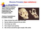 miocene primates ape radiations