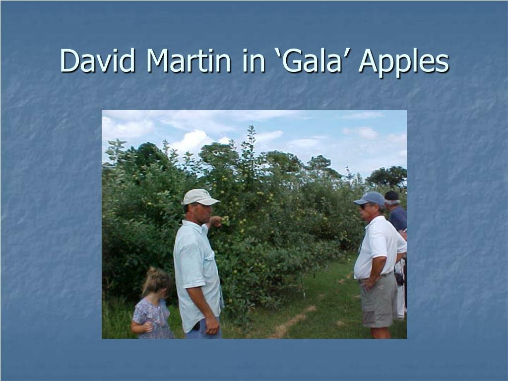 David Martin in 'Gala' Apples