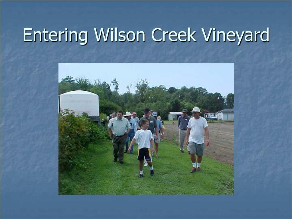 Entering Wilson Creek Vineyard