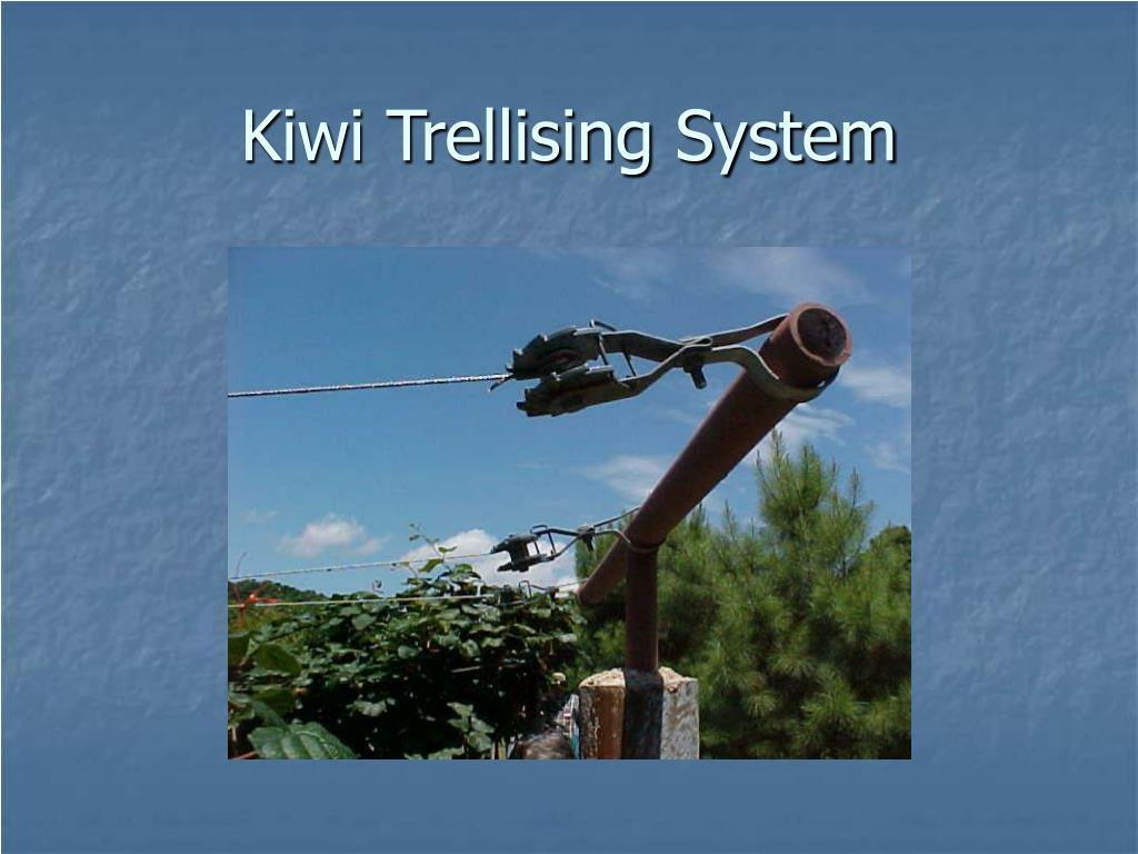 Kiwi Trellising System