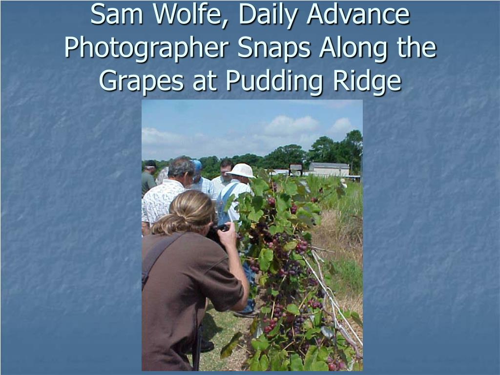 Sam Wolfe, Daily Advance Photographer Snaps Along the Grapes at Pudding Ridge