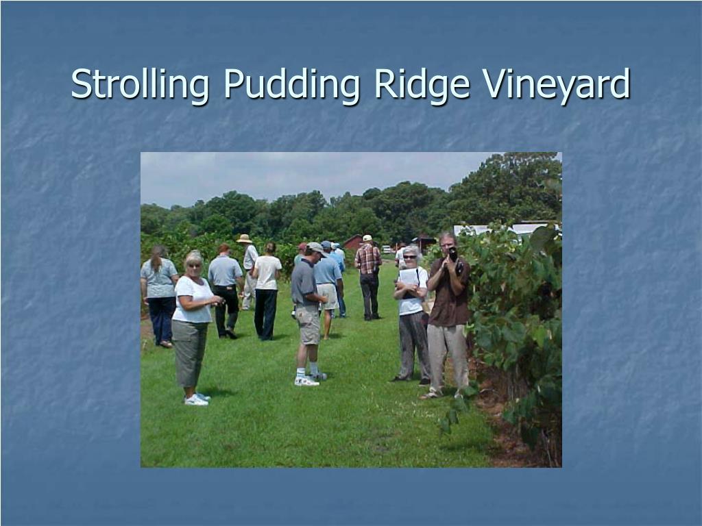 Strolling Pudding Ridge Vineyard