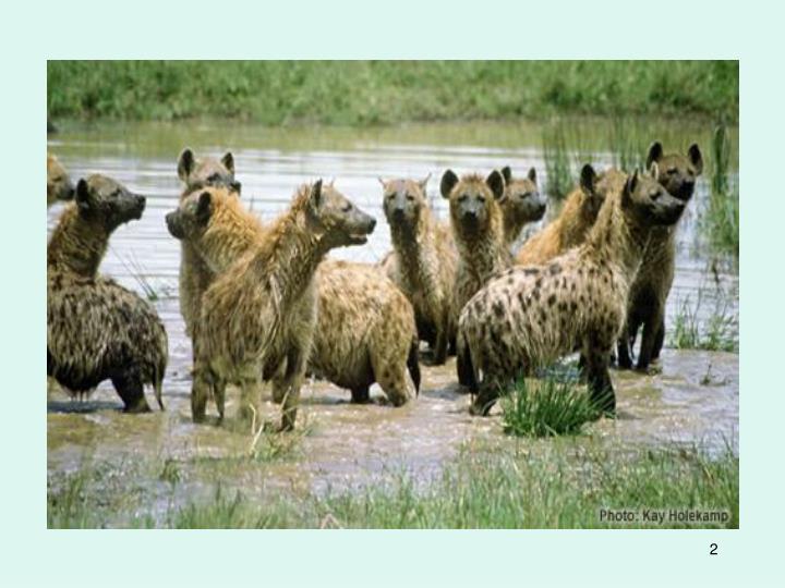 Hyena biology
