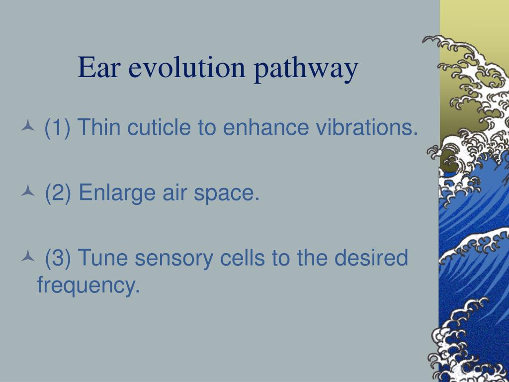 Ear evolution pathway