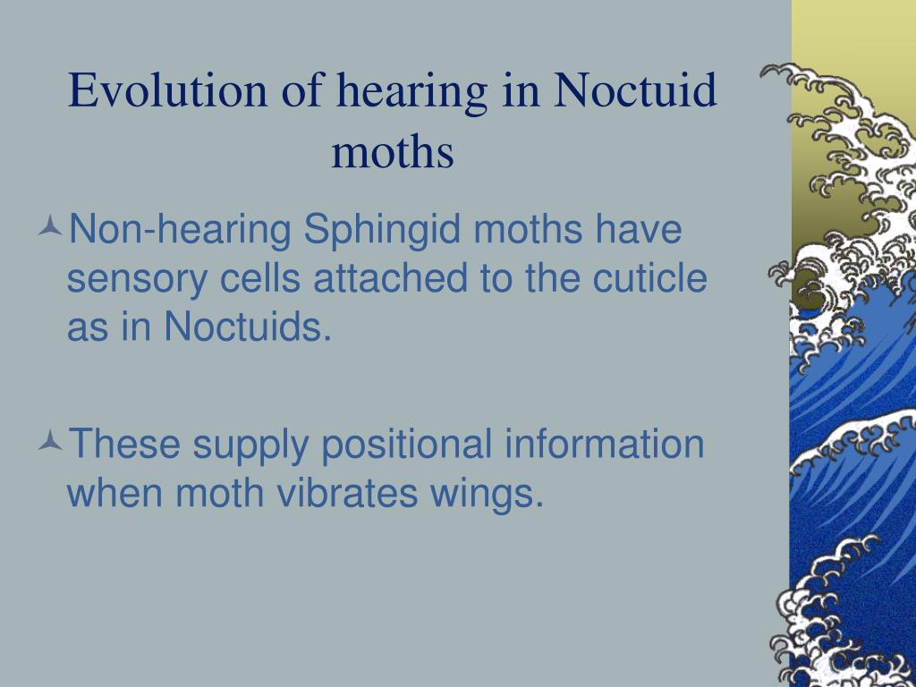 Evolution of hearing in Noctuid moths